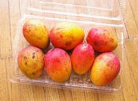 Mango0698
