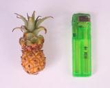 Mini_pine