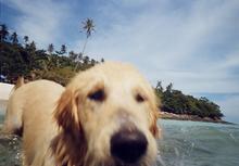 P_dog