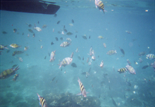 P_fish2